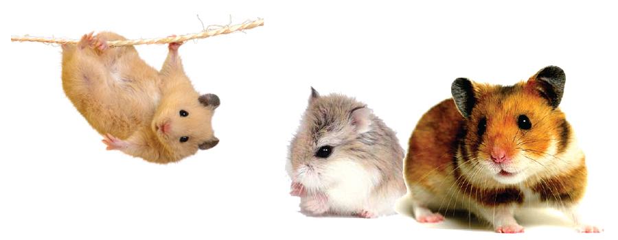 hamster1.jpg
